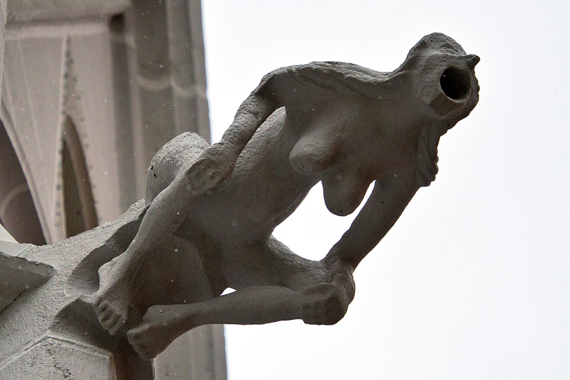 A gargoyle of the Albrechtsburg Castle in Meissen
