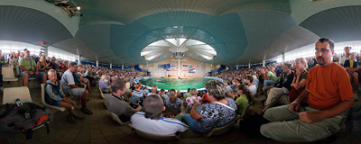 The show in the Klaipeda Dolphinarium.  Click to view this panorama in new fullscreen window