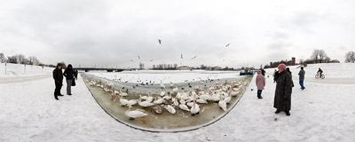 Swans and other birds are waiting to be fed on the bank of the frozen Vistula river in Kraków.  Click to view this panorama in new fullscreen window